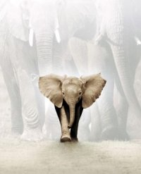 Whispers: An Elephant's Tale poster