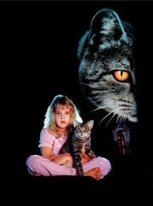 Los ojos del gato 1875x2521