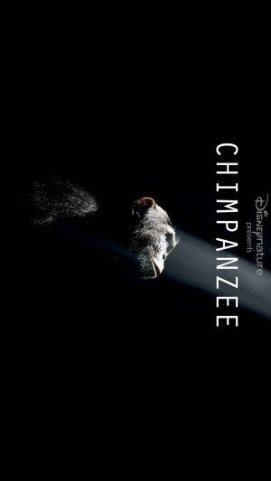 Chimpanzee 1654x2940