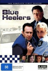 Blue Heelers poster