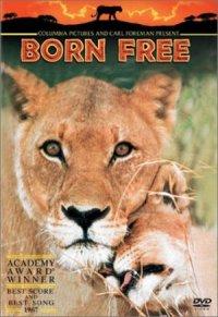 Born Free: A New Adventure poster