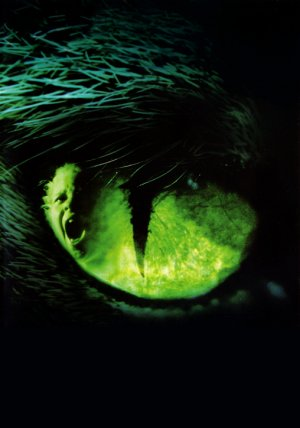 Los ojos del gato 508x725
