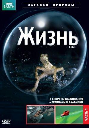 Life 430x618