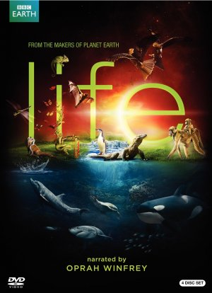Life 1683x2321