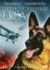 Finding Rin Tin Tin Cover