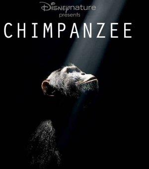 Oscar, a csimpánz 703x800