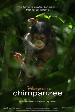 Oscar, a csimpánz 1178x1748