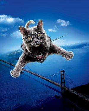 Cats & Dogs - Die Rache der Kitty Kahlohr 1205x1500