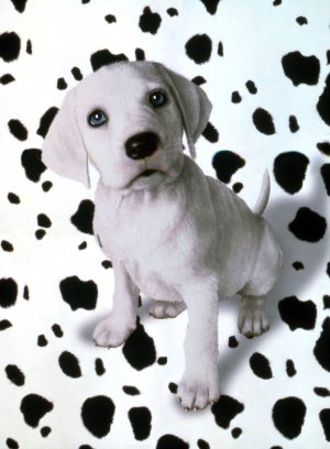 102 Dalmatians Key art