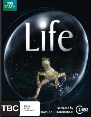 Life 736x950