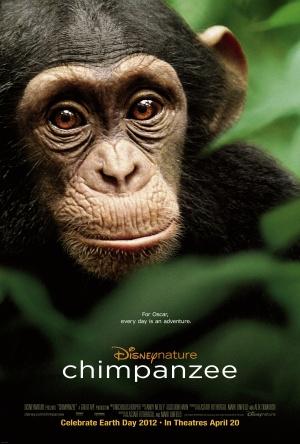 Oscar, a csimpánz 2700x4000