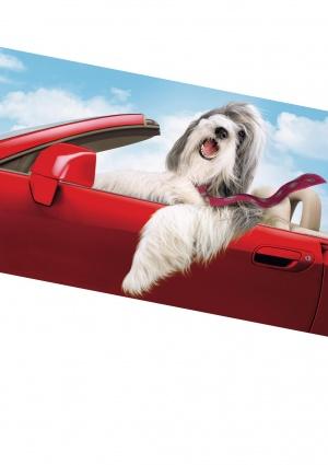 The Shaggy Dog 2116x3000
