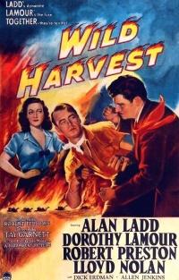 Wild Harvest poster