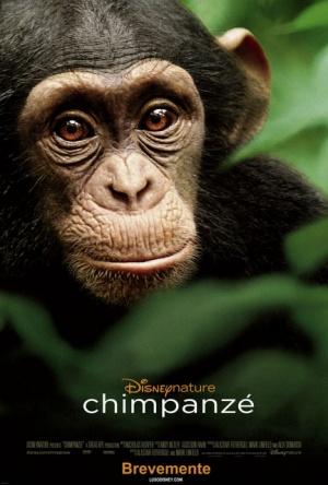 Chimpanzee 432x640