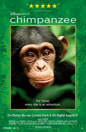 Oscar, a csimpánz 3262x5000