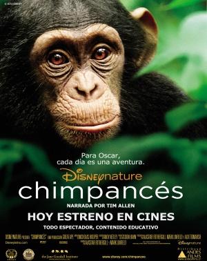 Chimpanzee 3966x5000