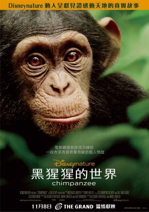 Chimpanzee 2140x3041