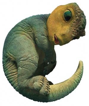 Dinosaur 619x738