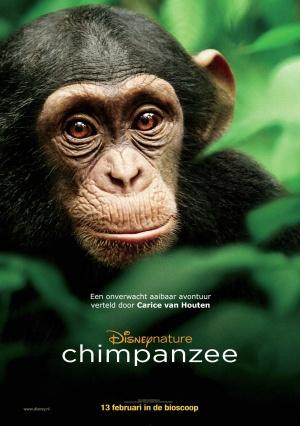 Chimpanzee 3076x4365