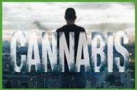 Cannabis poster